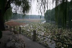 Beihai Park, Beijing by Micheal Kan/Flcker